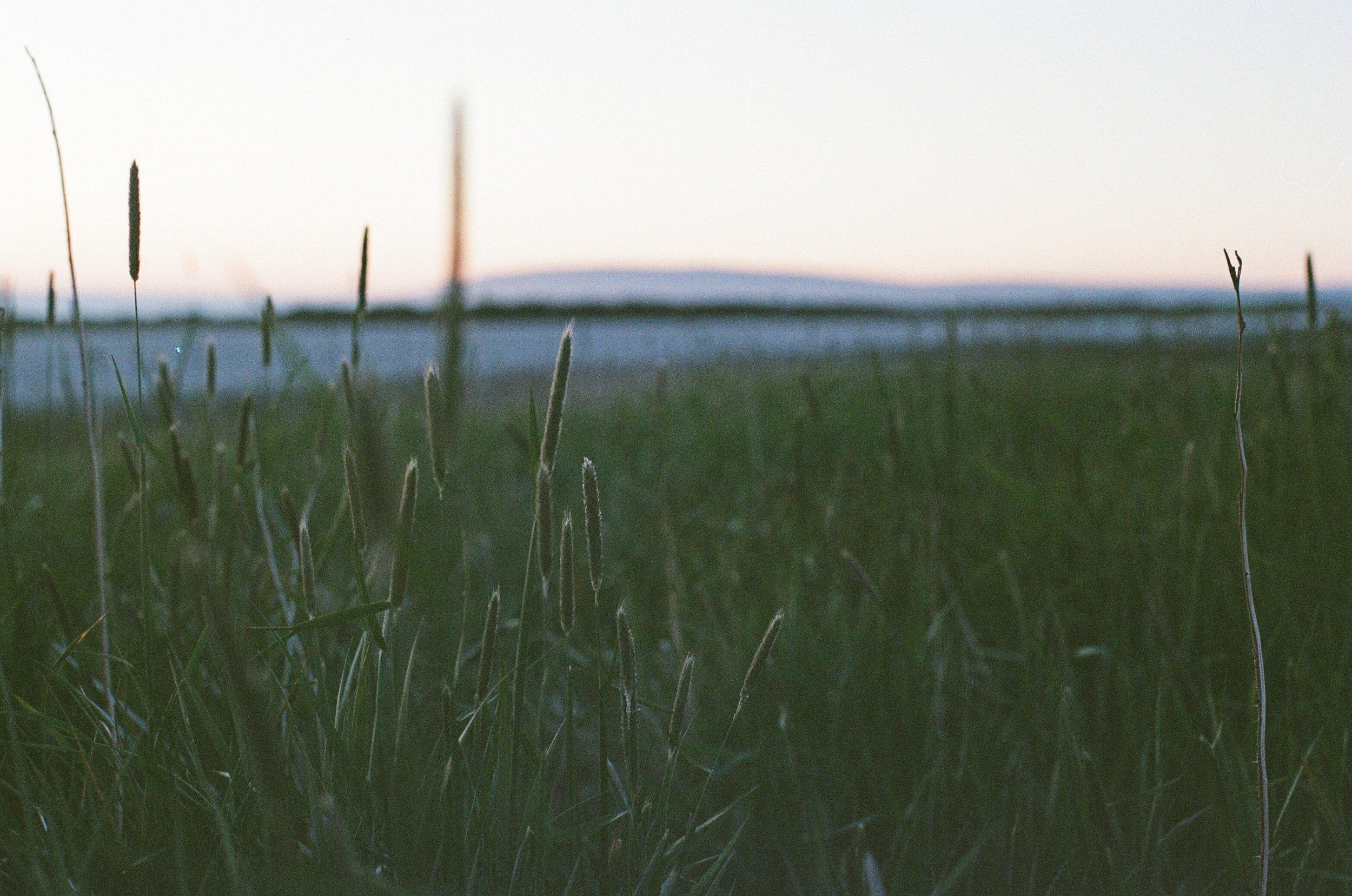 Newfoundland shot on film II
