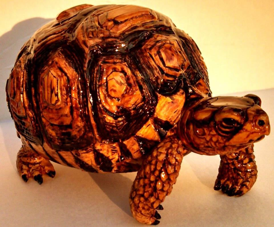 wood burl tortoise