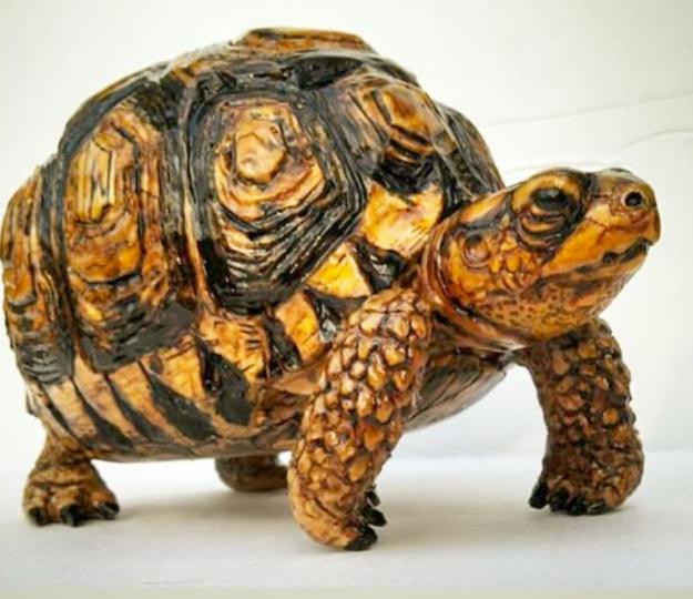 Sharp_tortoise.jpg.jpg