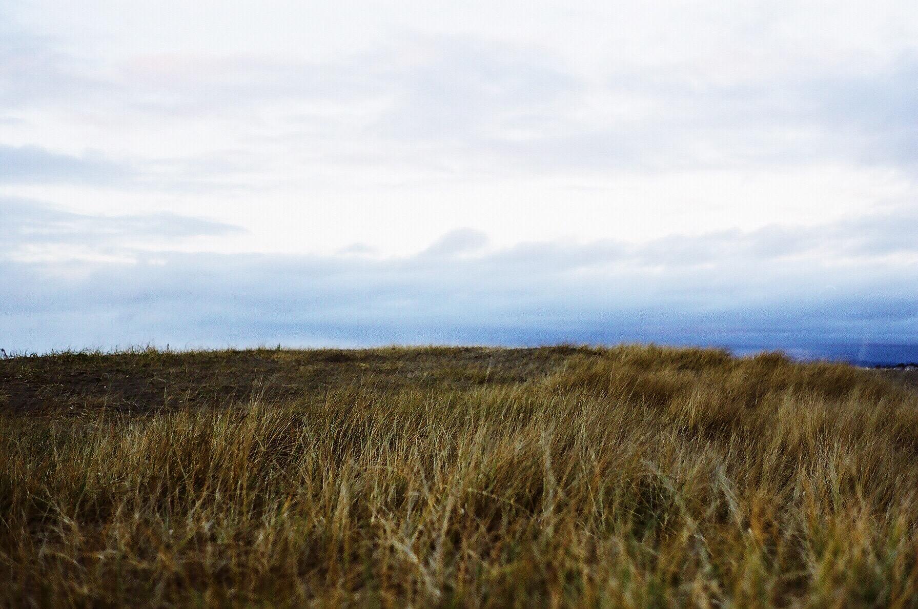 Grass: Seaside, OR   16.1 Fuji Pro 160c