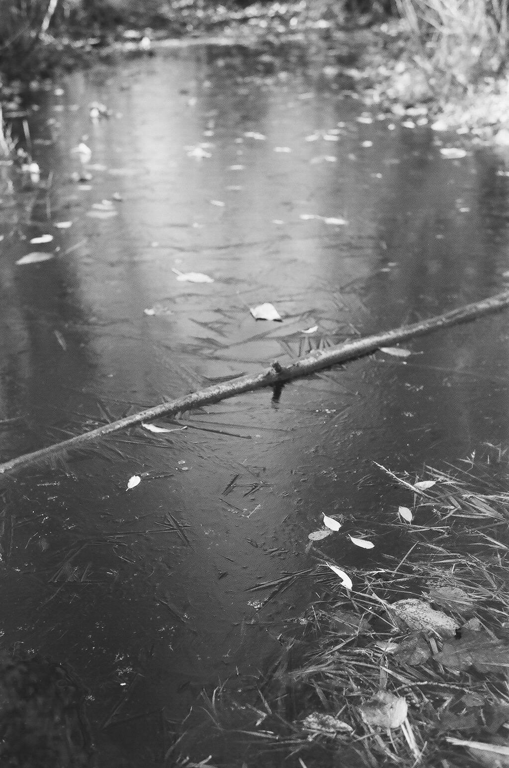 Branch Frozen in Pond   15.12 Ilford Delta 100