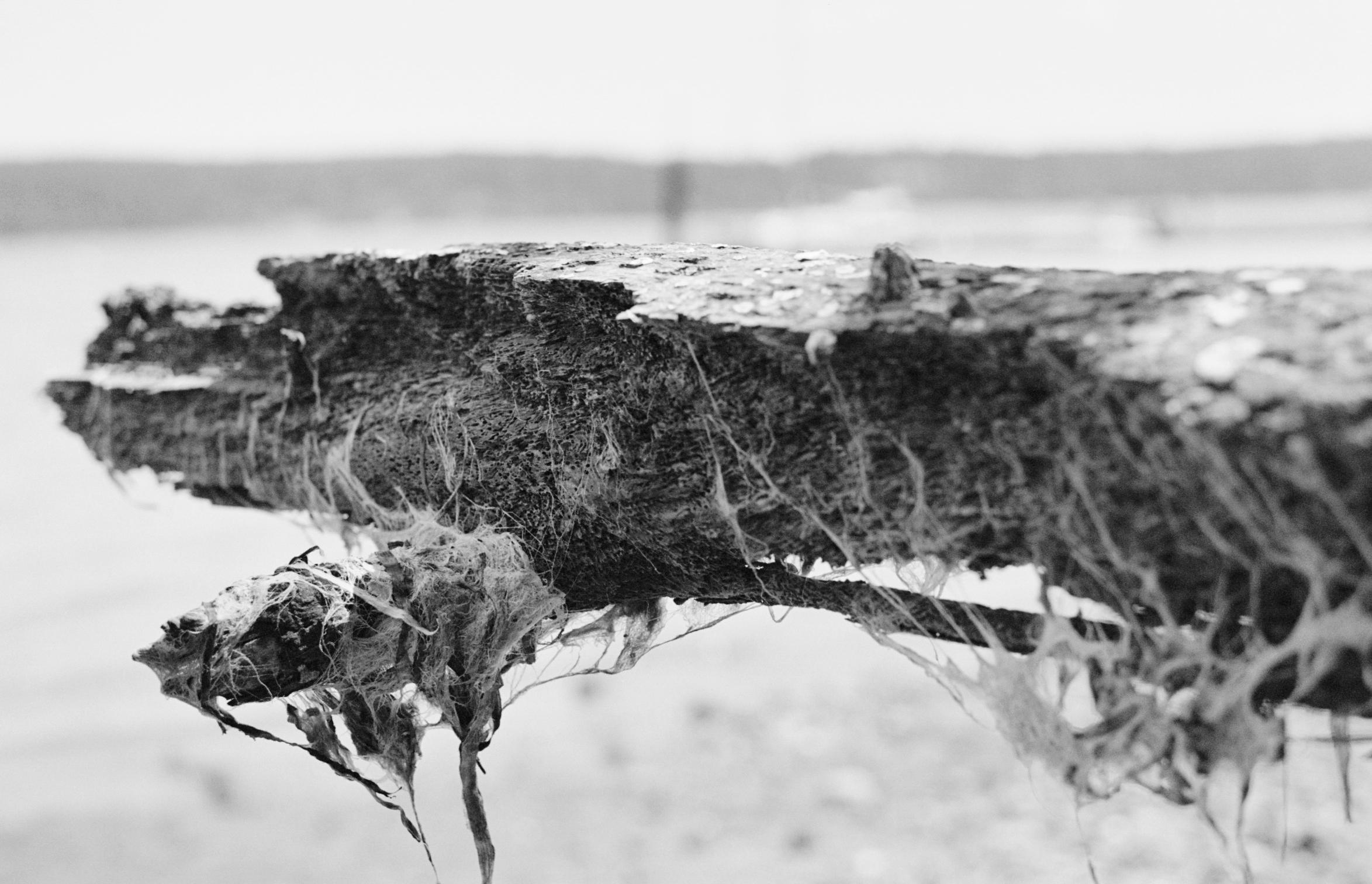 Pacific Erosion   17.7 Ilford XP