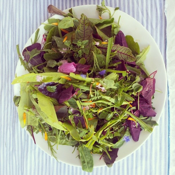 Leaf, herb & flower salad with leatherwood dressing @provenancegrowers #pantreeproducecatering