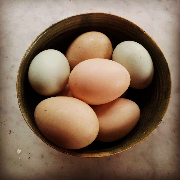 duck eggs from #franklin s new winter market