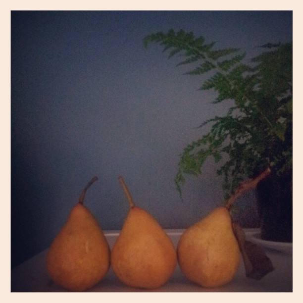 Three pretty perfect pears, the only ones not gobbled up as crostate @slowfoodhobart #wildpears