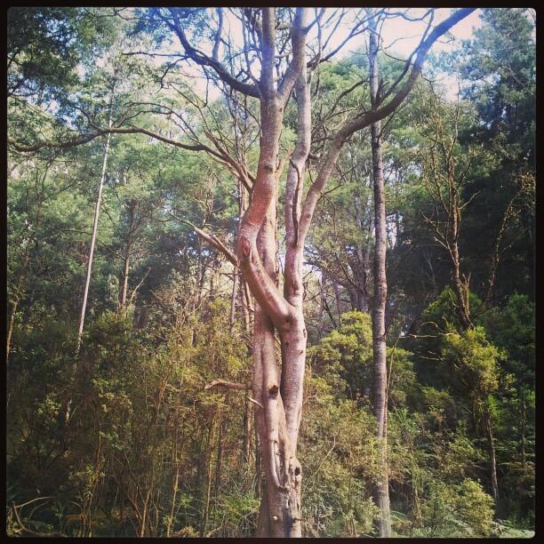 Tree Lovers