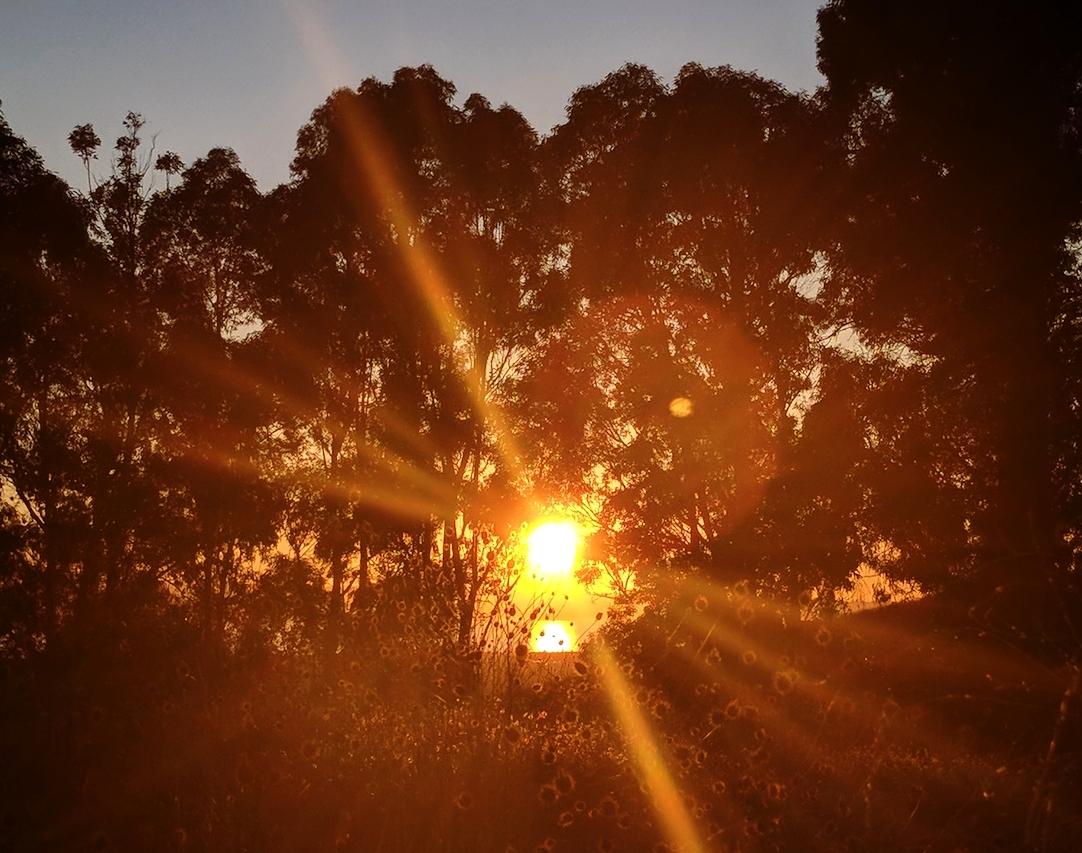 Bay Sunset.jpg