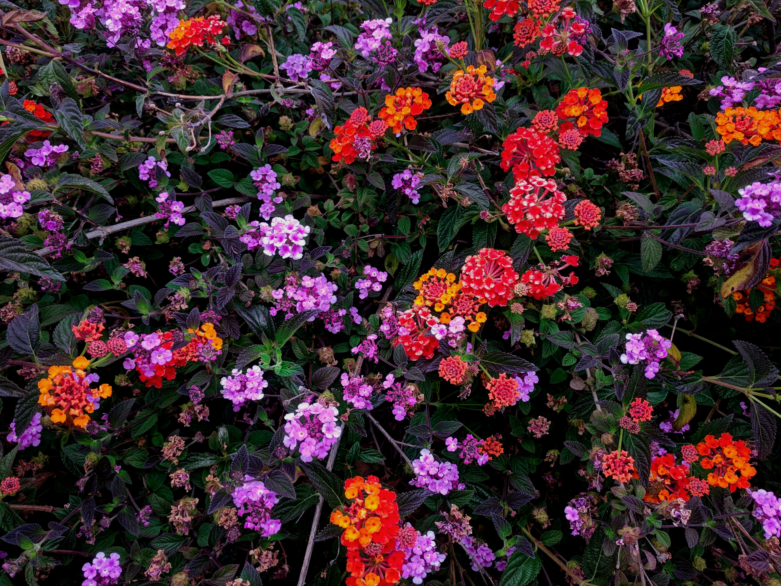 Orange+%26+Purple+Flowers.jpg