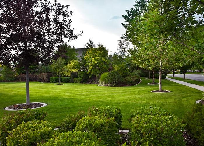 lawn area irrigation.
