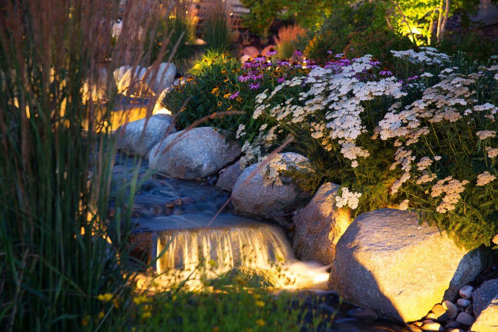 Garden stream with plants.