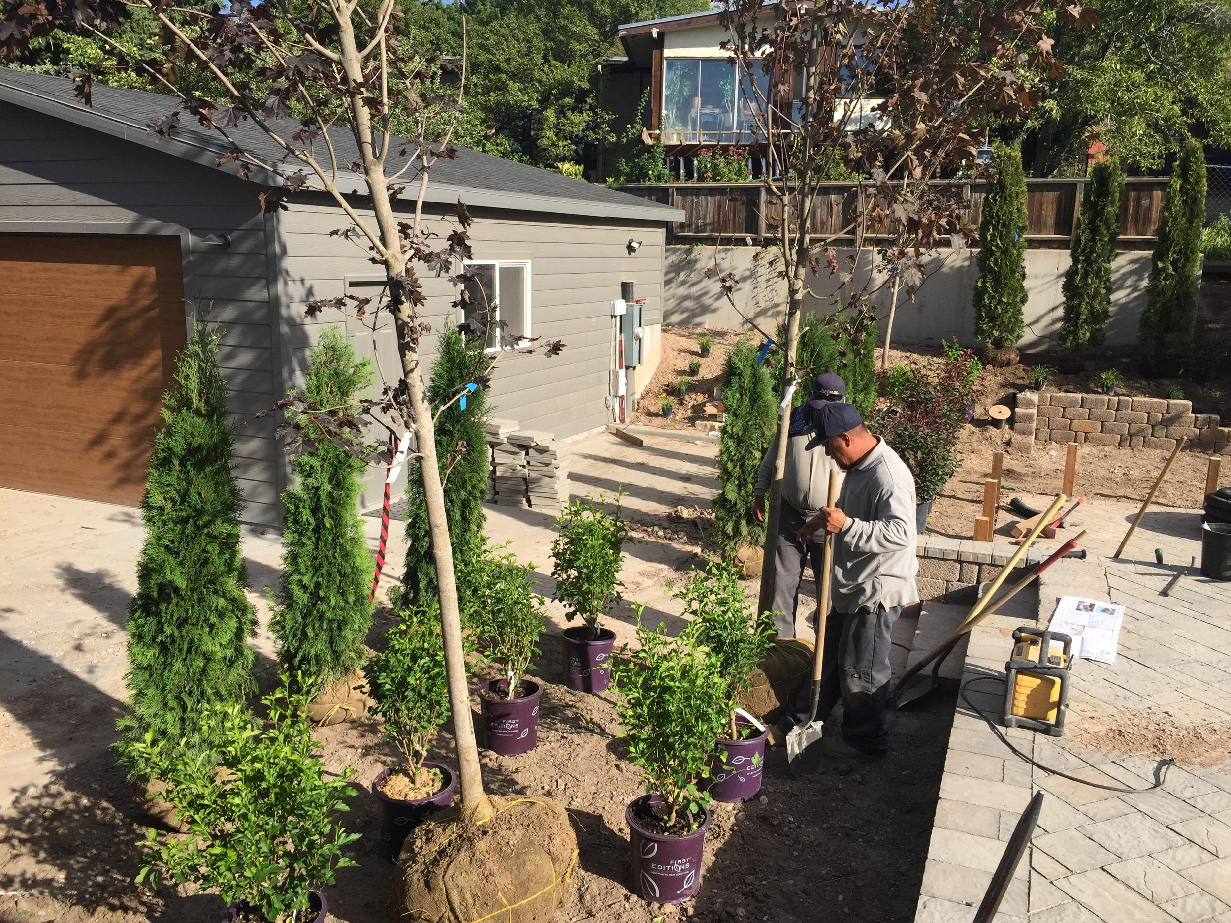 Planting set out by Platinum Landscape & Pools.