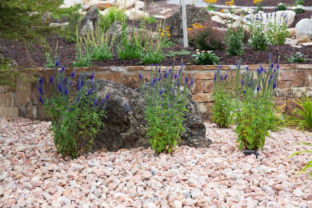 Garden bed with gravel mulch and stone wall.