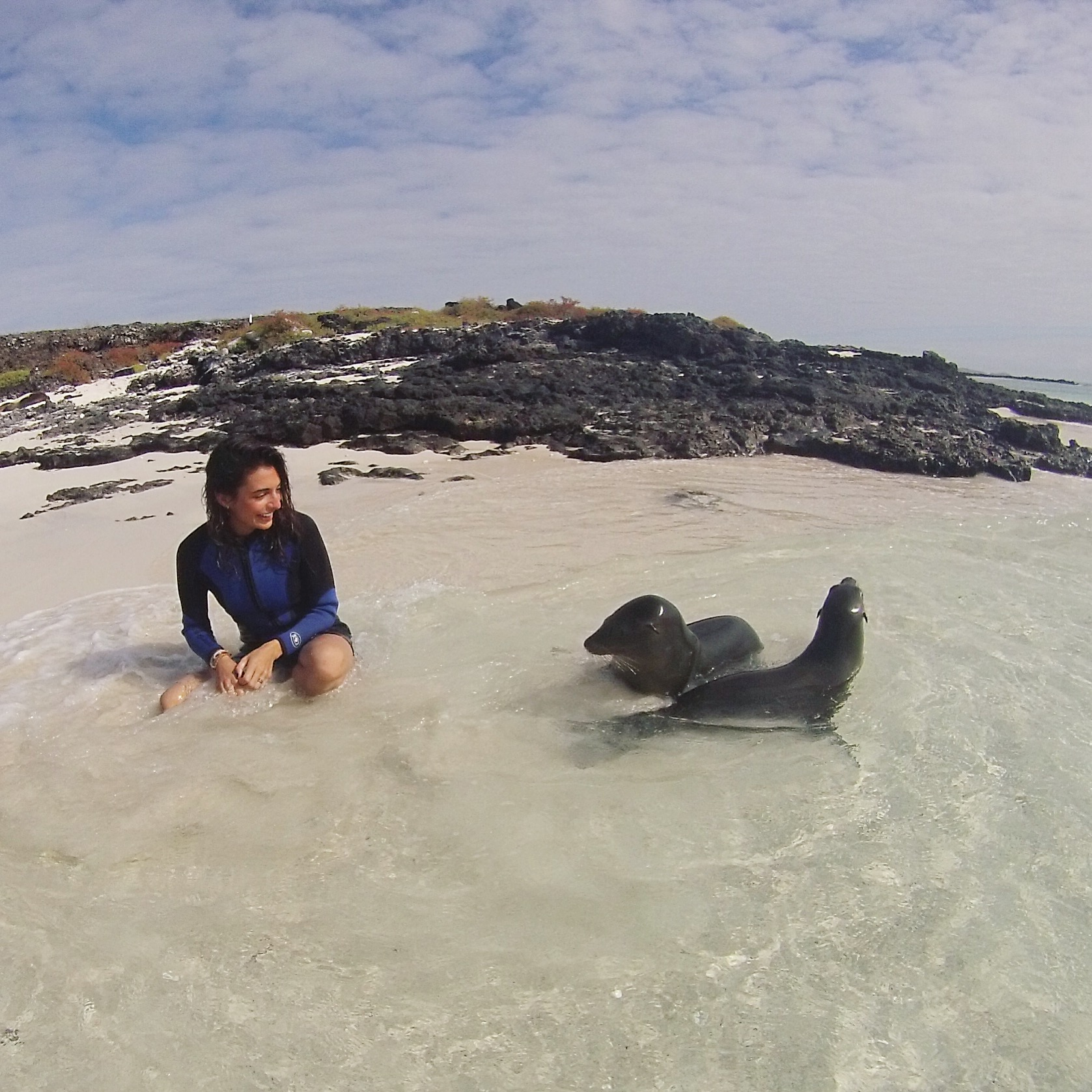 Bartolomé Island, Galapagos.  Pikaia Lodge Tour. Sea lions in the wild.