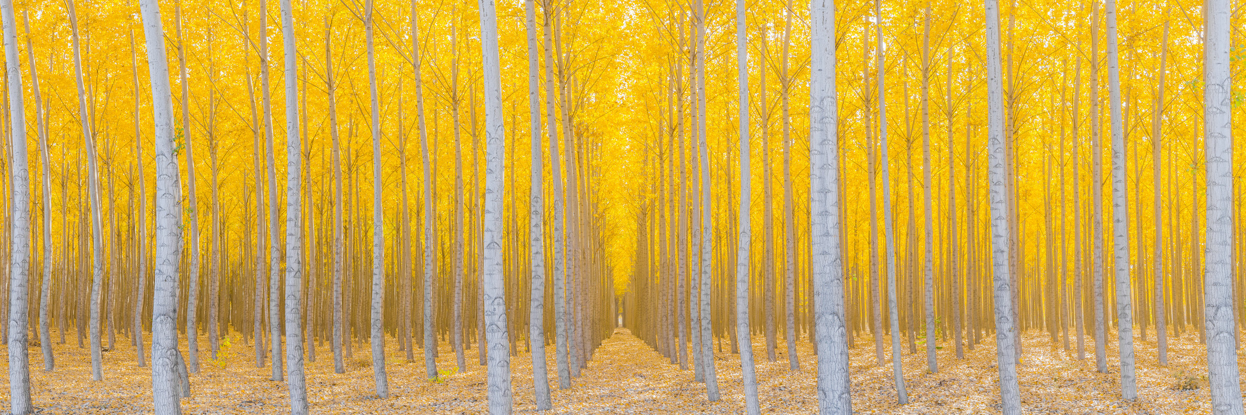Silence is Golden (pano)