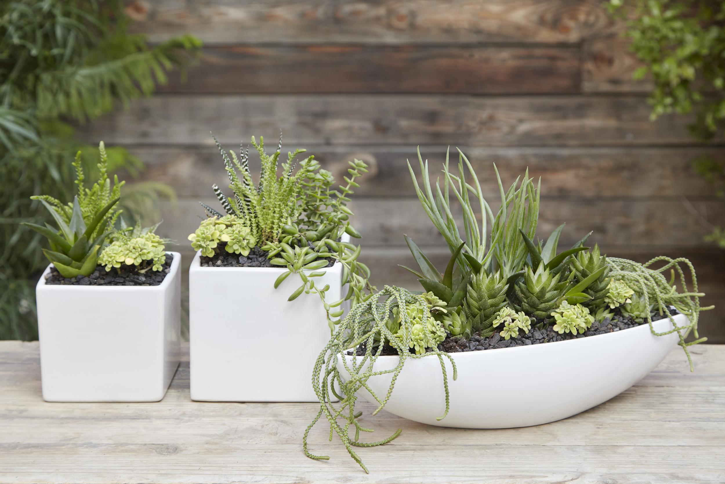 Flora Grubb Gardens Potting Bench DIY Gifts