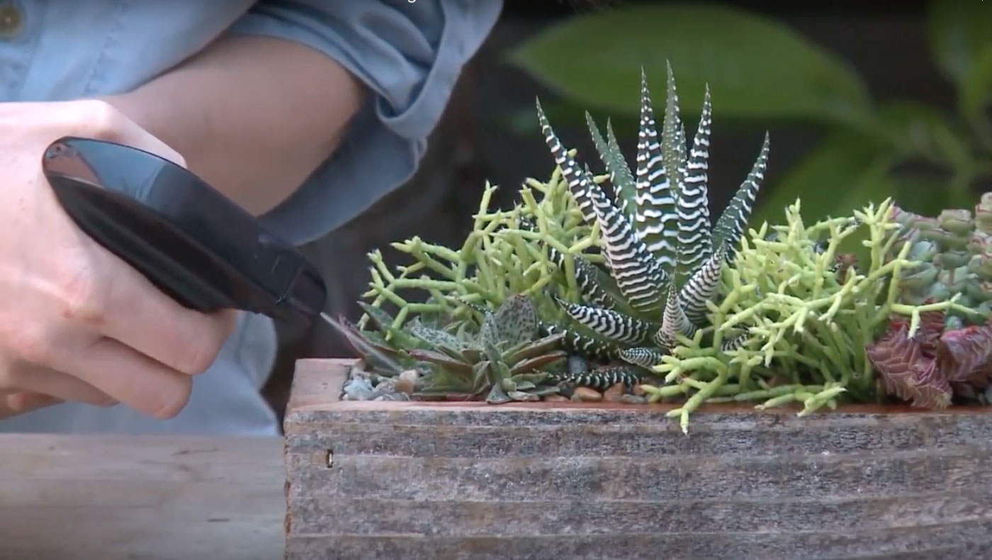 How To Water Potted Succulents Flora Grubb Gardens