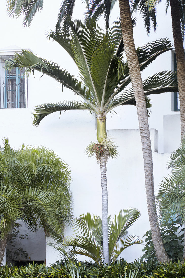 Palm Trees Sold by Flora Grubb Gardens