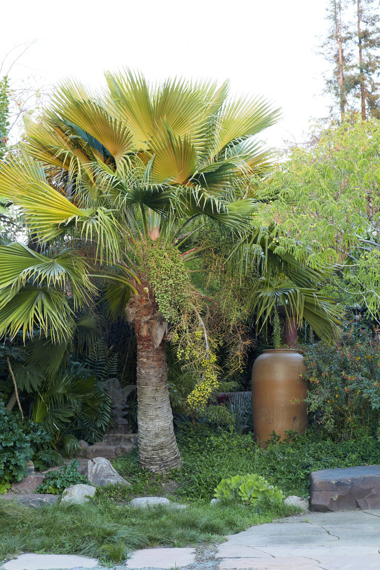 The Perfect Palm Tree at Flora Grubb Gardens