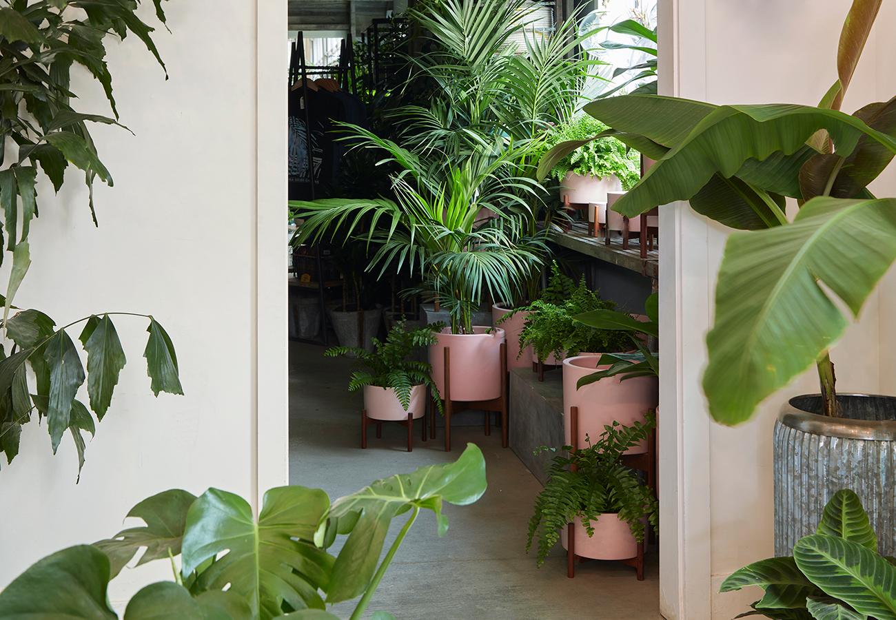 Flora Grubb Gardens Pink Planter Case Study Pots.jpg