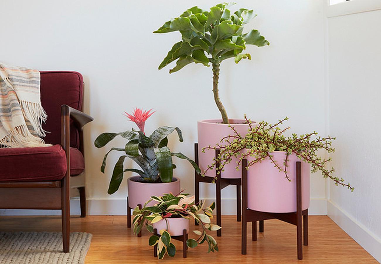 Flora Grubb Gardens Case Study Pink Planter Pots.jpg