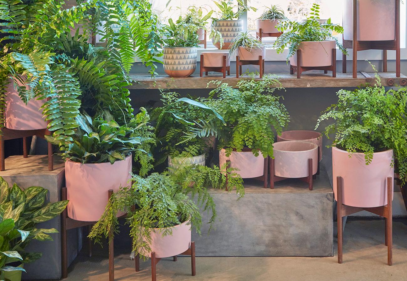 Flora Grubb Gardens Case Study Modern Pink Pots in Store Display.jpg
