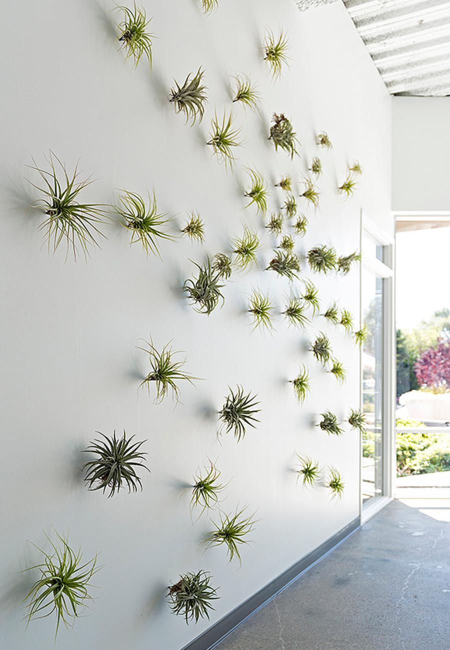 Flora-Grubb-Gardens-Thigmotrope-Perch-on-Wall.jpg