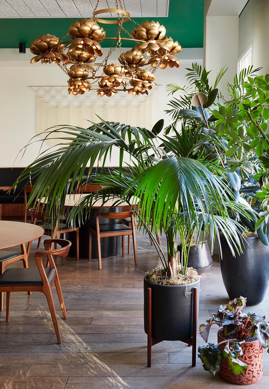 Flora-Grubb-Gardens-Mister-Jius-Dining-Room-Houseplant-Design.jpg