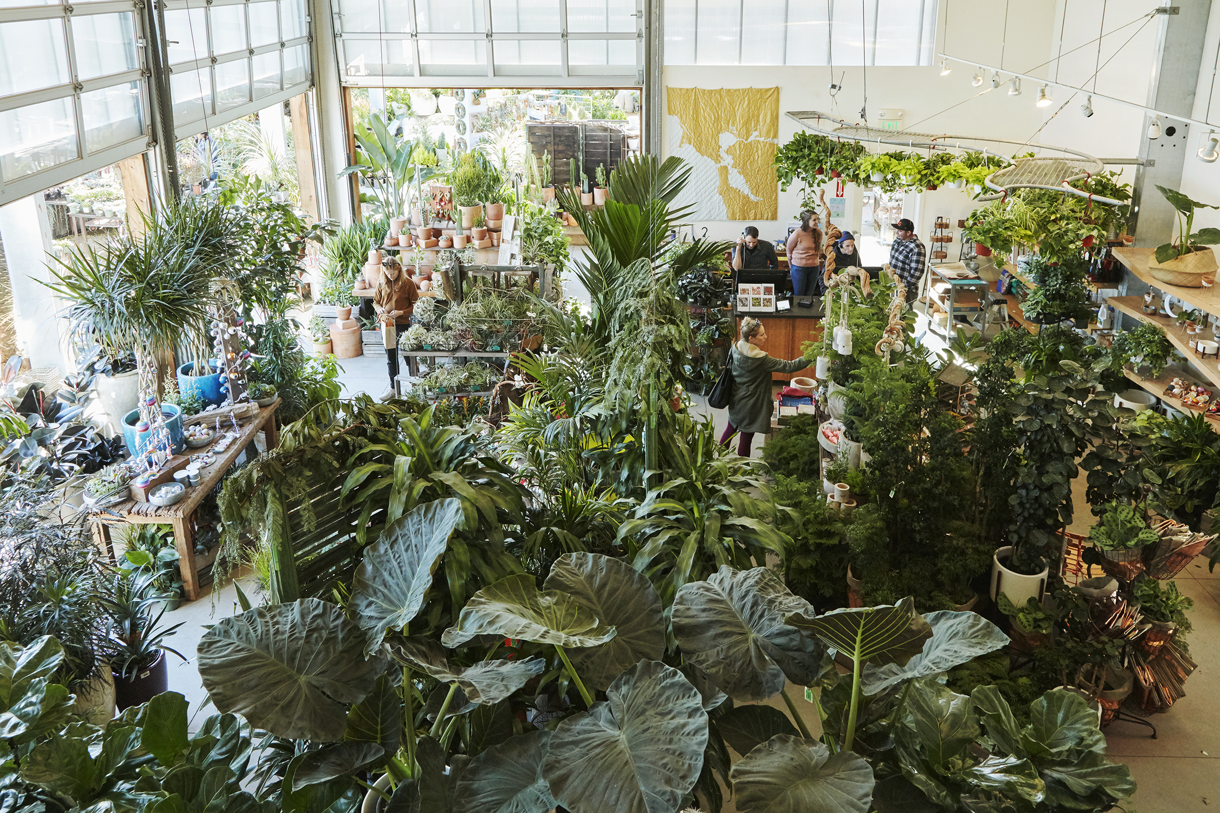 Flora Grubb Gardens in San Francisco has a large selection of houseplants.jpg