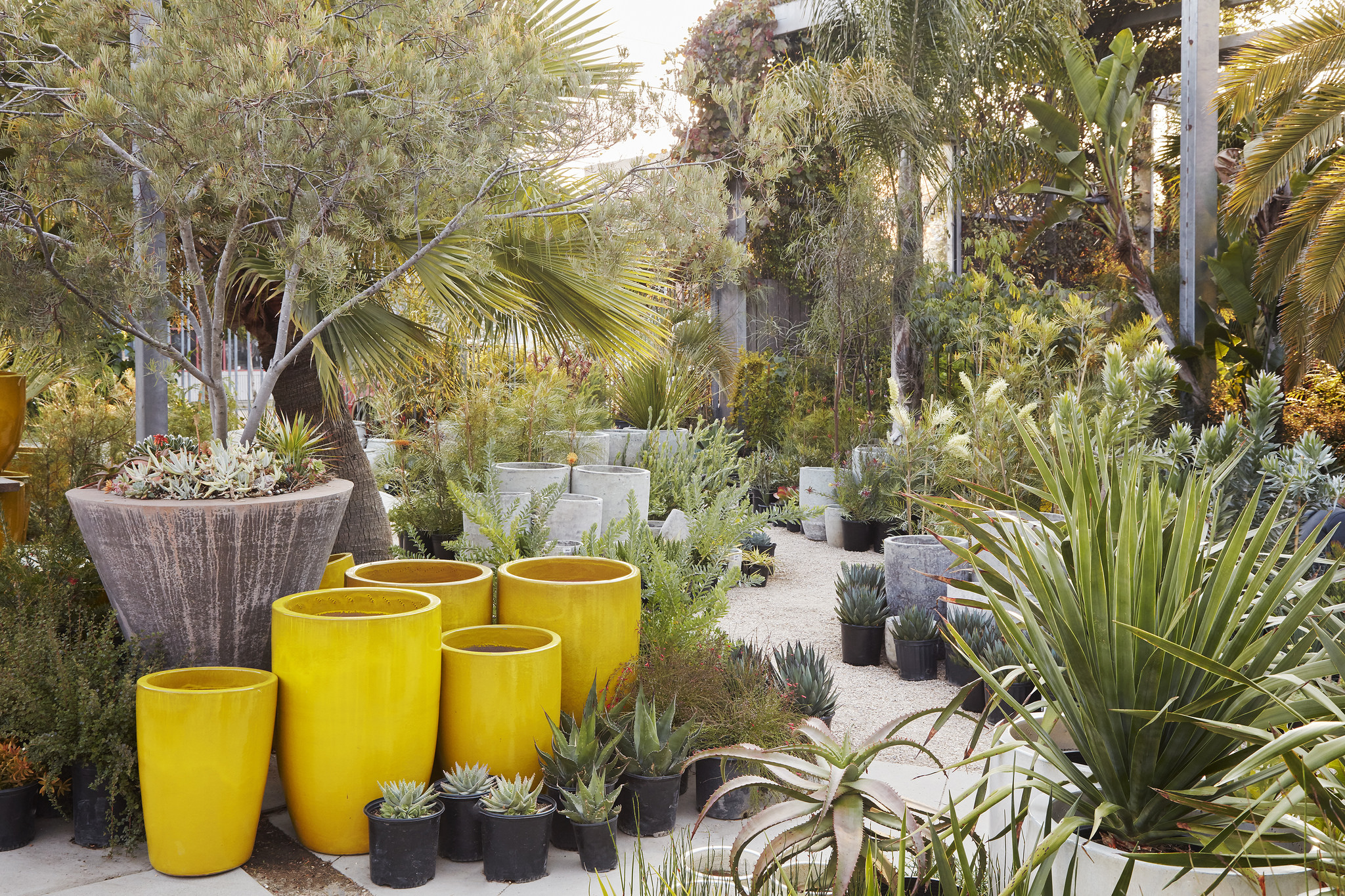 Flora Grubb Gardens Container Pots in Yellow.jpg