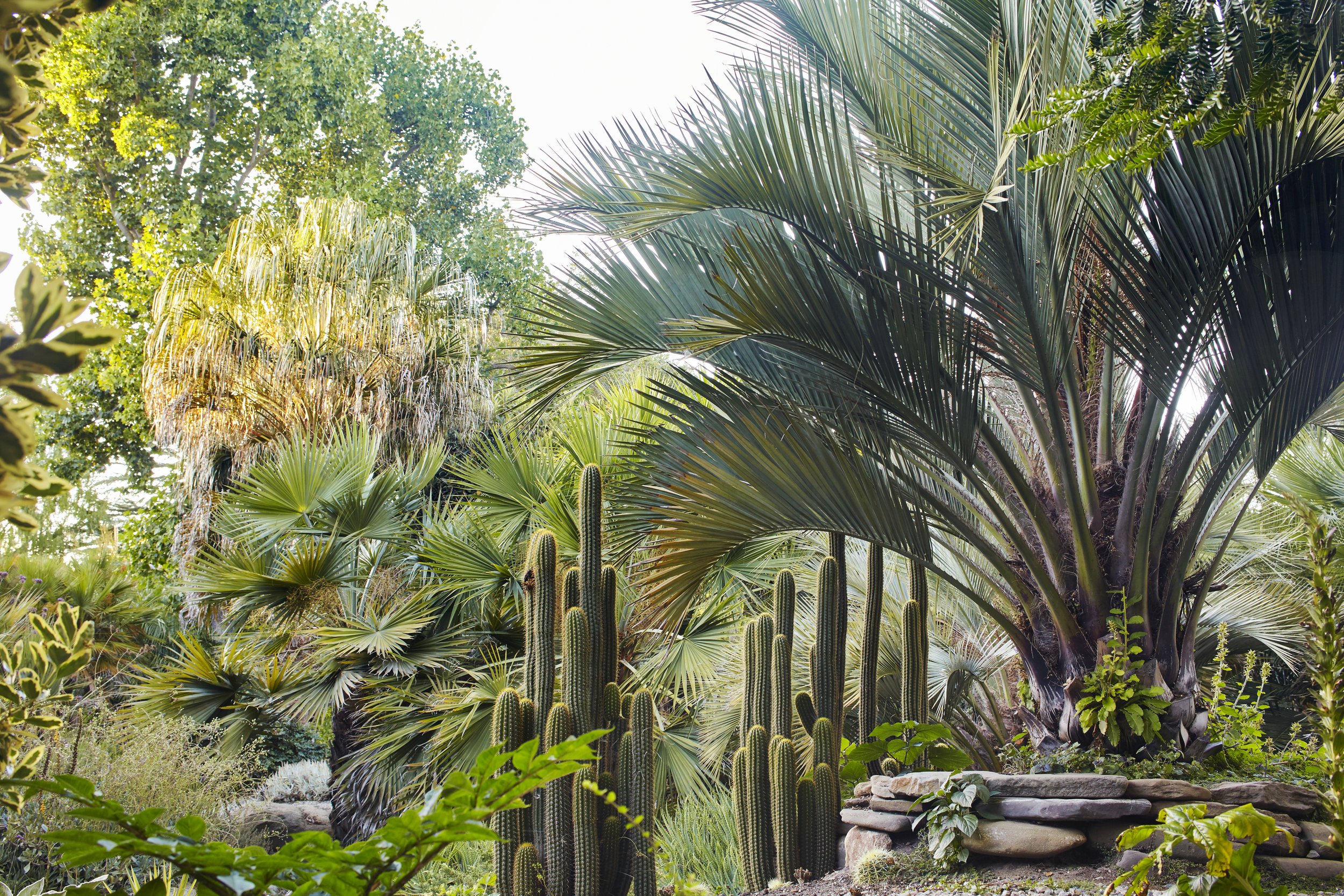 Flora Grubb Gardens Garden Design.jpg