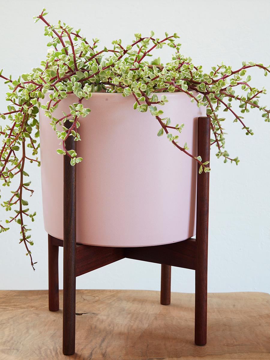 Flora Grubb Gardens Pink Case Study Pot Succulent.png