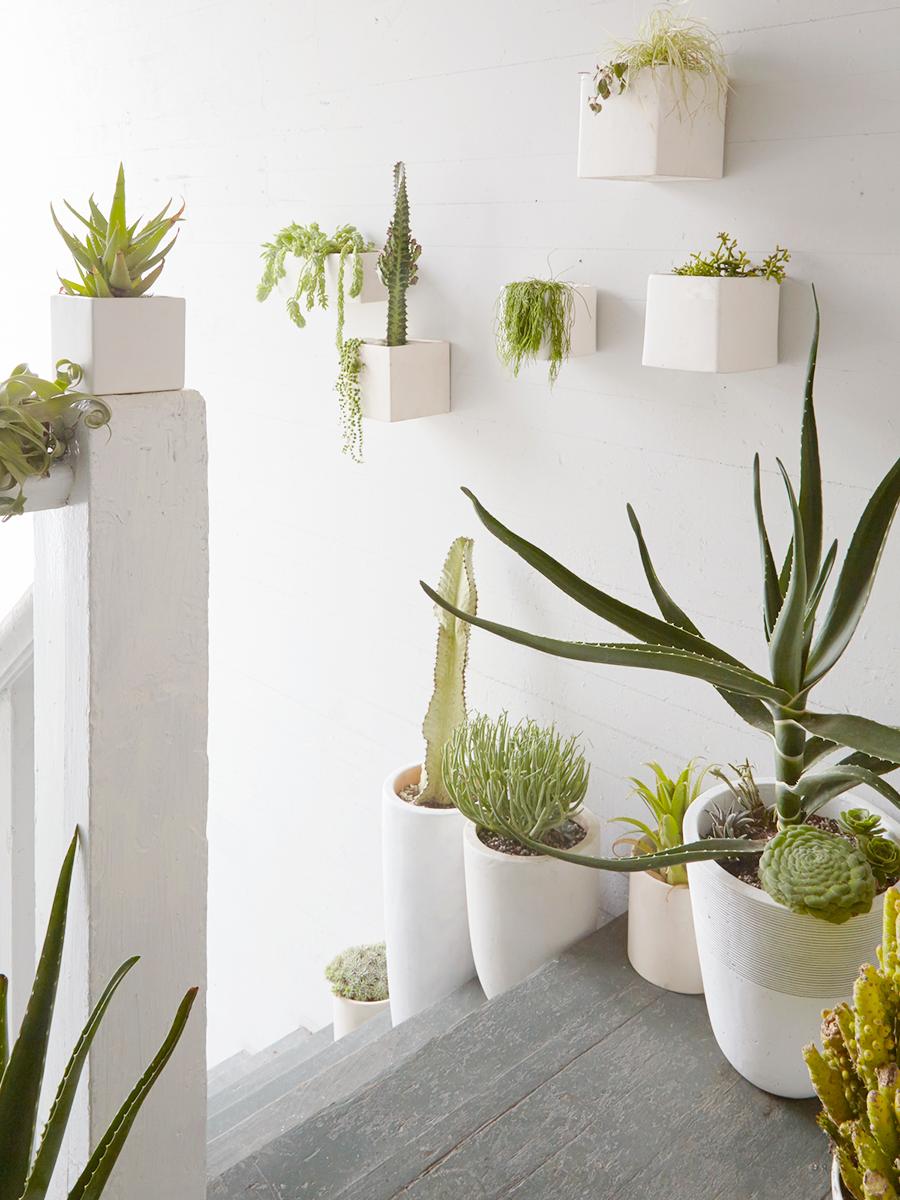 Flora Grubb Gardens Houseplant Inspiration Desert Modern.png