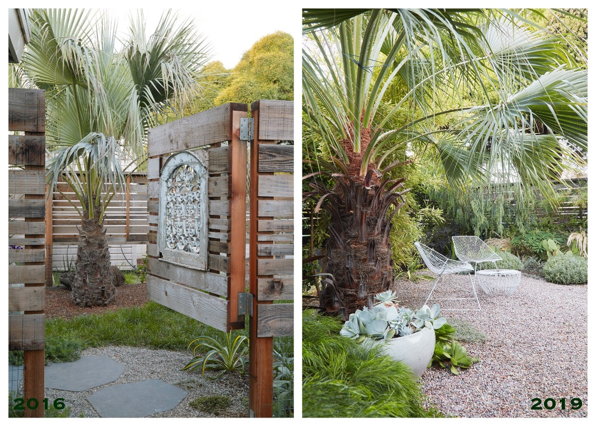 Flora Grubb Gardens - Garden Palm Before and After.png