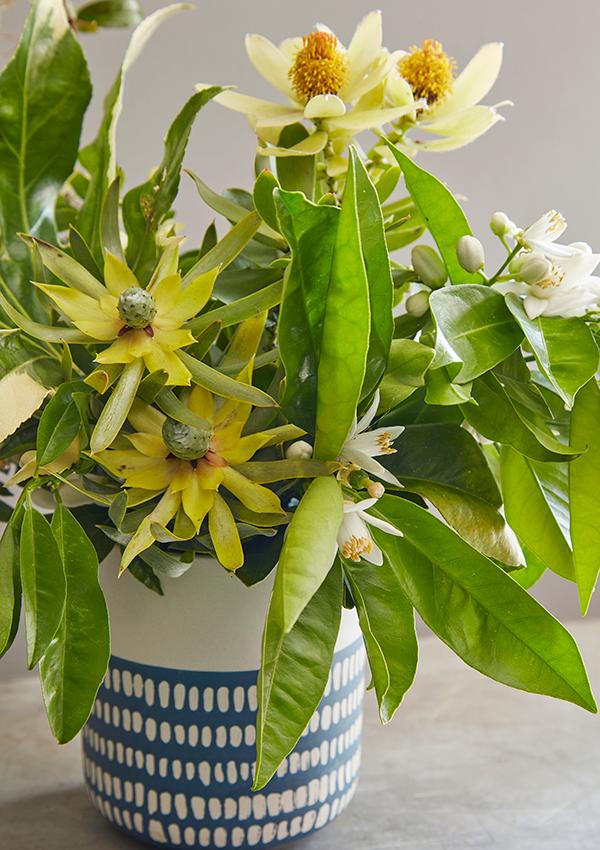 Flora Grubb Gardens Leucadendron Plant for Cutting Garden.png
