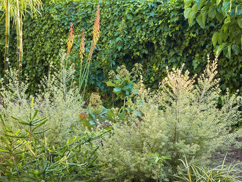 Flora Grubb Gardens Kniphofia Cutting Garden.png