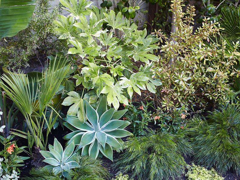 Flora Grubb Gardens Variegated Foliage Cutting Garden.png