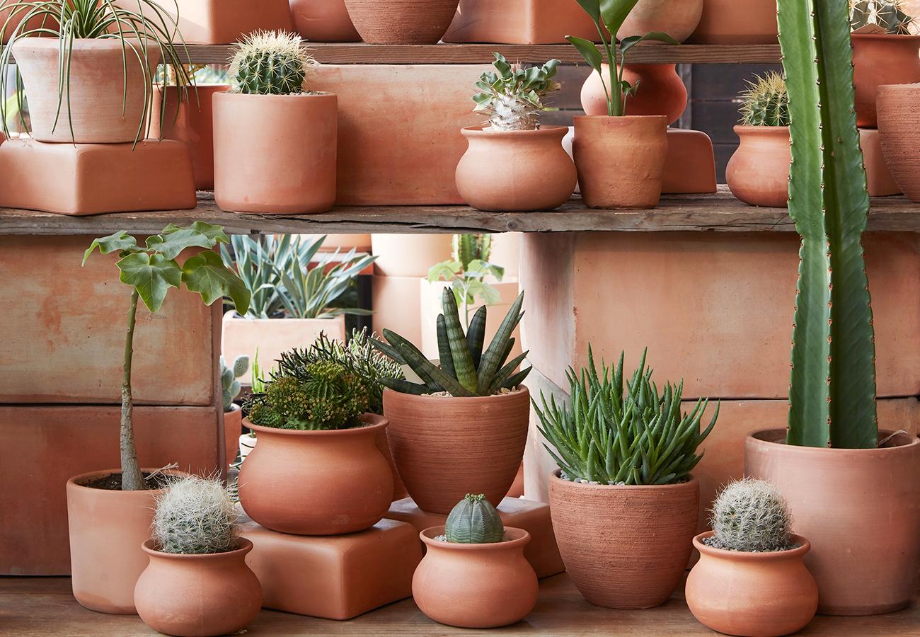 Terra Cotta Pots And Planters Flora Grubb Gardens
