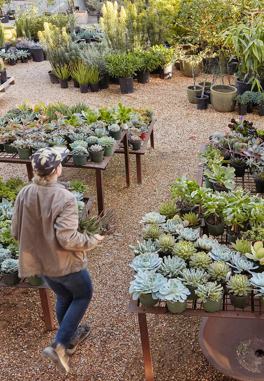 Flora Grubb Gardens Get in Your Garden.png
