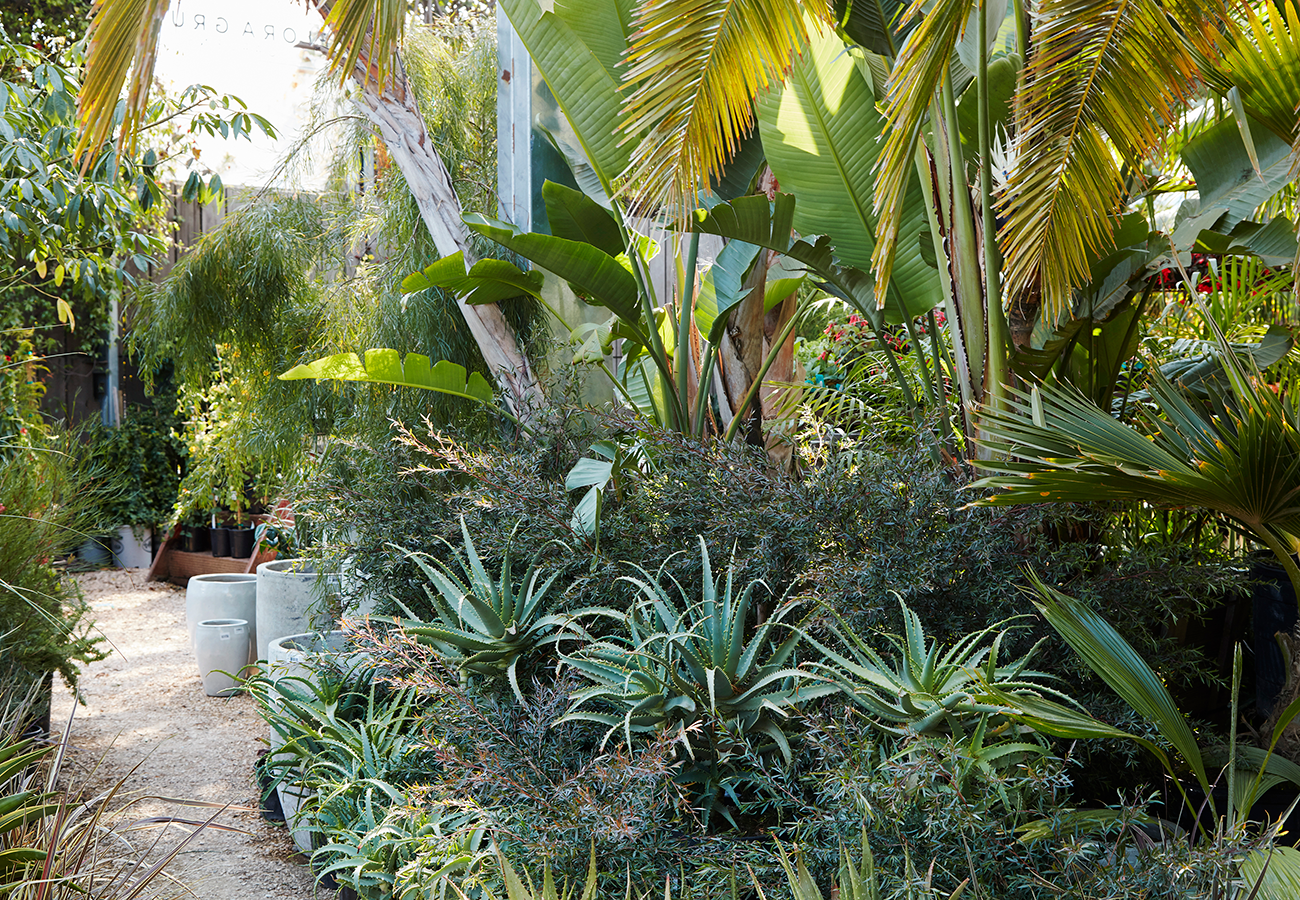 Flora Grubb Gardens Garden Path at the Store.png
