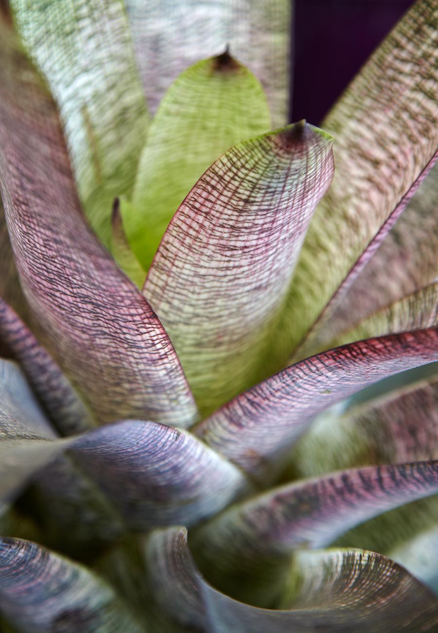 Flora Grubb Gardens Bromeliad.png