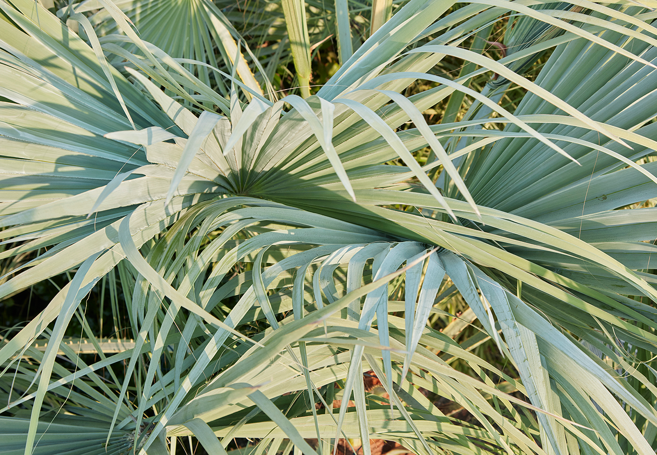 Flora Grubb Gardens Brea Clara Palm Leaves.png