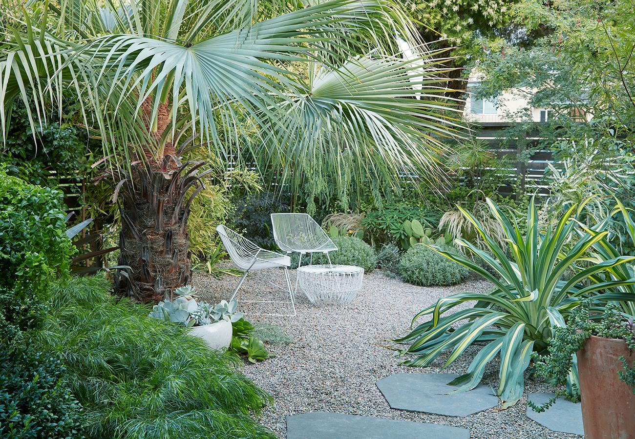 Flora Grubb Gardens Brea Clara Palm in Garden.png