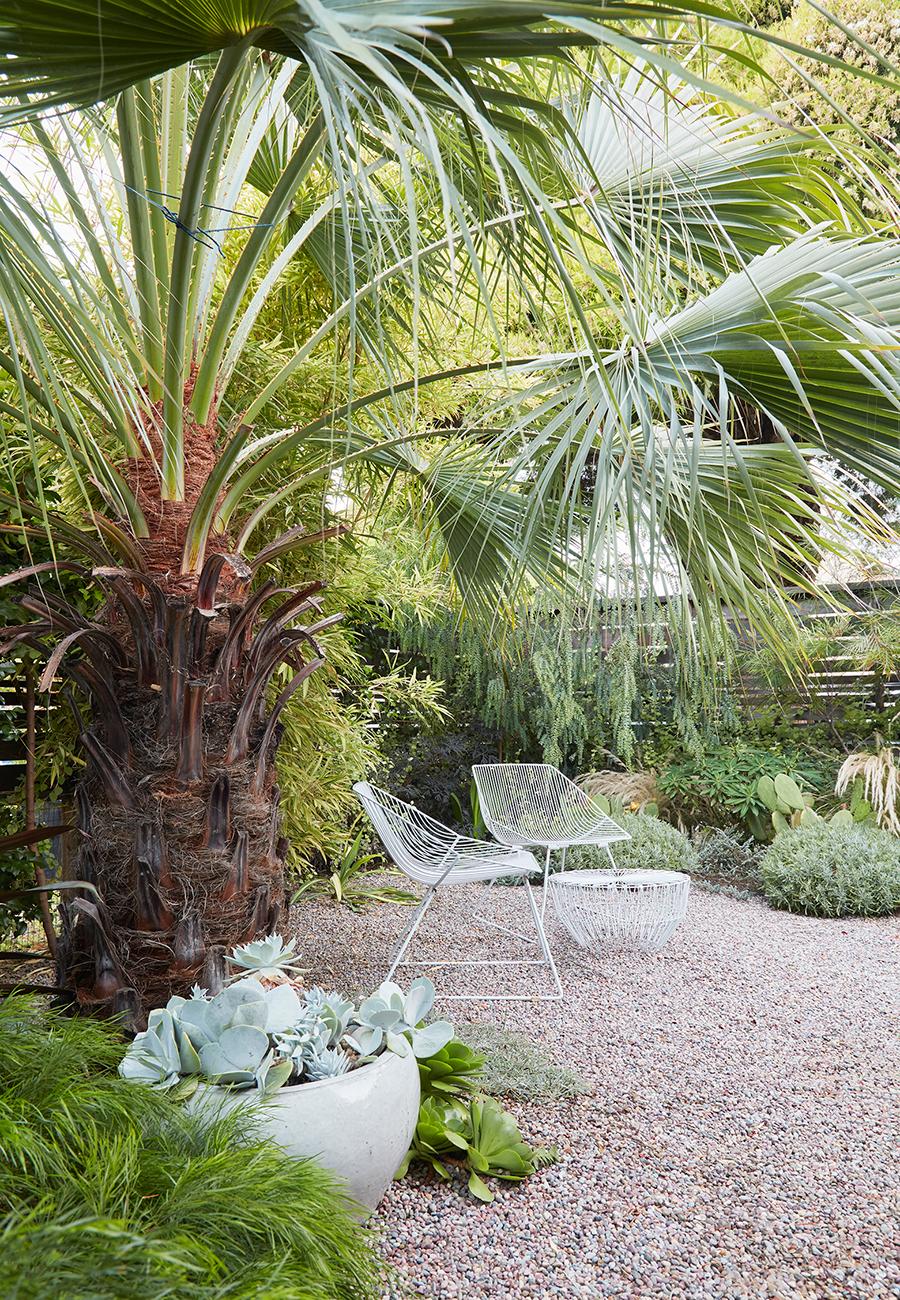 Flora Grubb Gardens Brea Clara Palm.png