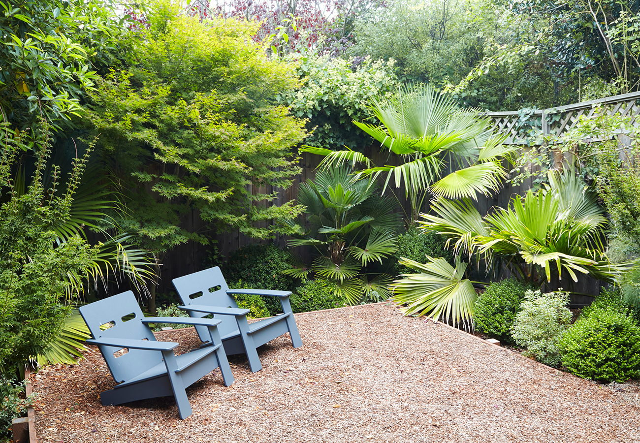 Trachycarpus palms and Japanese maples are a happy garden combo here in the Bay, and also in Japan!