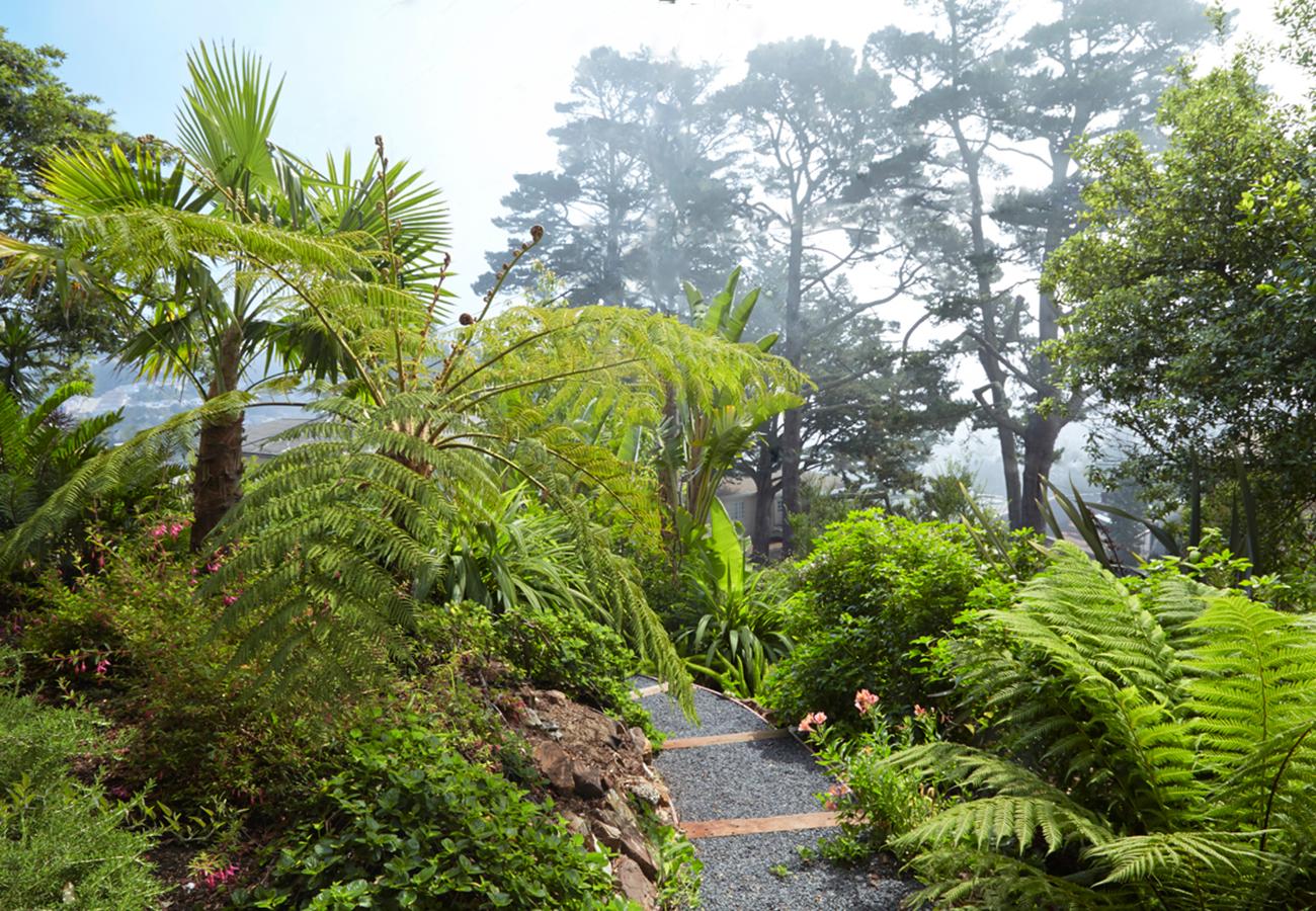 Trachycarpus latisectus  (large palm on left);  Cyathea cooperi  (Australian tree fern), and  Dicksonia antarctica