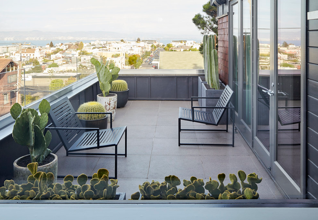 Cactus happy hour on the roof! Golden barrel cactus (in the round black pots) with a variety of Opuntia species and columnar cacti enjoying the view of SF.