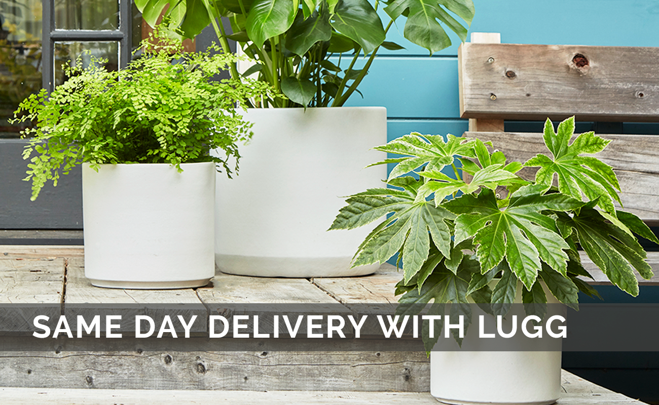 Flora Grubb Gardens Same Day Delivery with Lugg.png