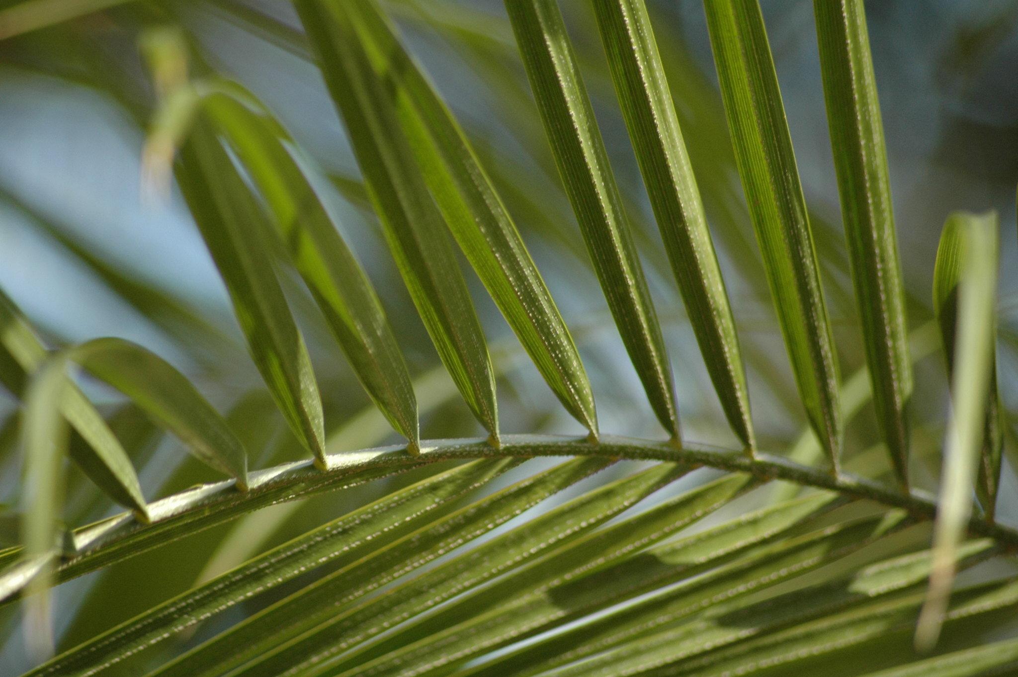 Palm Tree at Flora Grubb Gardens