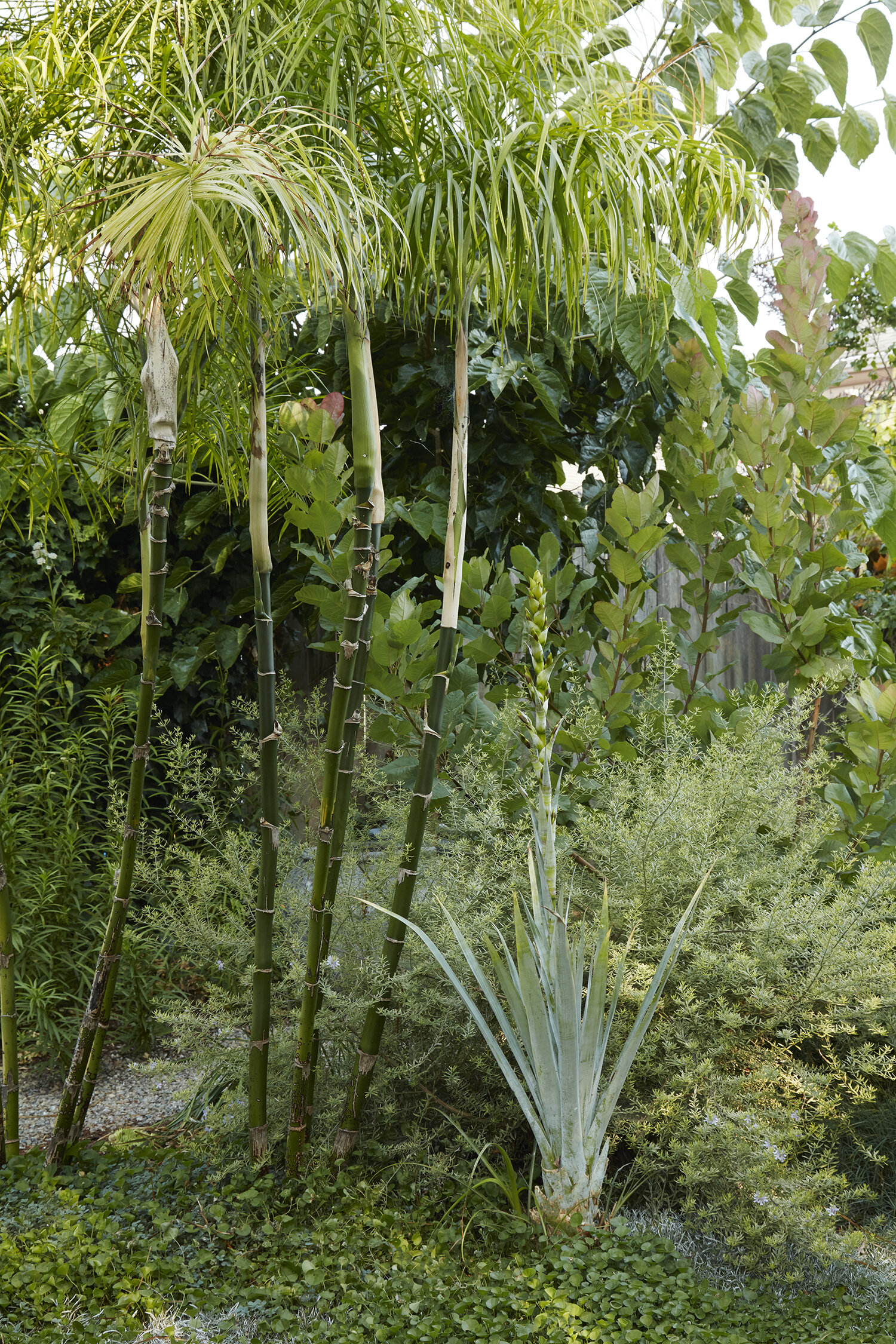 The Ultimate Guide To Growing Palm Trees In The Bay Area Flora