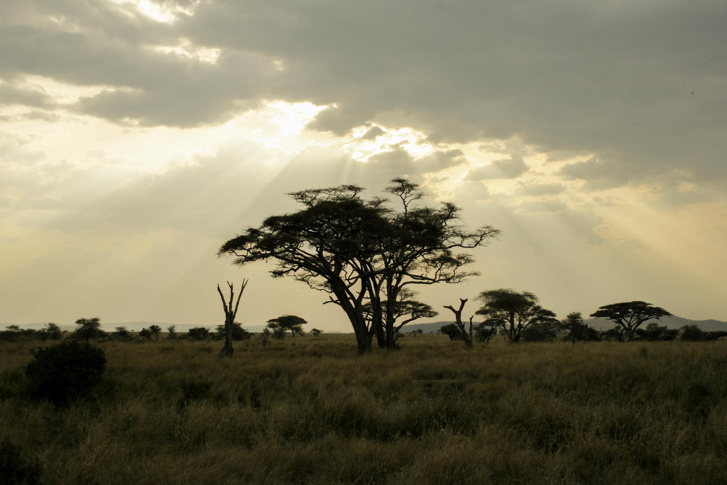 Safari, Tanzania.
